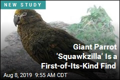 Giant Parrot Heracles Inexpectatus Aka Squawkzilla Is First Of Its Kind Find In New Zealand Study