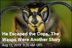 He Escaped the Cops. The Wasps Were Another Story