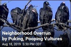 Neighborhood Overrun by Puking, Pooping Vultures