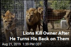 Lions Kill Owner After He Turns His Back on Them