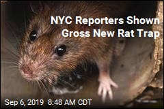 NYC Reporters Shown Gross New Rat Trap