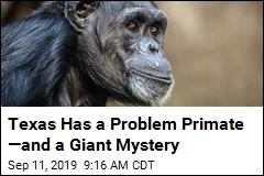 Reports: An Irate Primate Is On the Loose in Texas