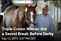 Report Casts a Cloud on Triple Crown Winner