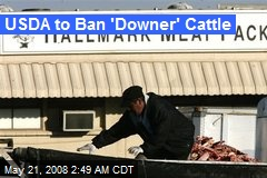 USDA to Ban 'Downer' Cattle