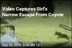 Video Captures Girl's Narrow Escape From Coyote