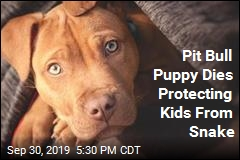 Pit Bull Puppy Dies Protecting Kids From Snake