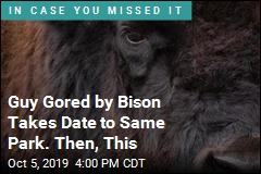 Guy Gored by Bison Takes Date to Same Park. Then, This