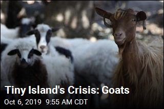 This Tiny Island Has Gone to the Goats