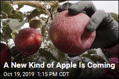 A New Kind of Apple Is Coming
