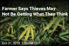Farmer Says Thieves May Not Be Getting What They Think