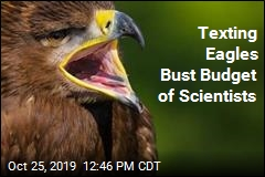 Texting Eagles Bust Budget of Scientists