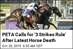 Since December, 34 Horses Have Died Here. Now It's 35