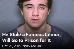 He Took a Lemur From a Zoo, Will Go to Prison for It