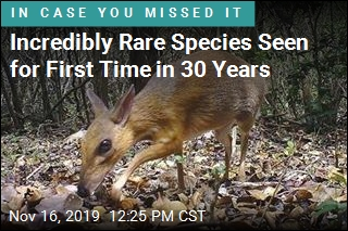 Incredibly Rare Species Seen for First Time in 30 Years