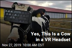 How Russia Is Getting Its Cows to Chill: VR Headsets