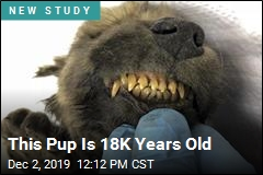 This Pup Is 18K Years Old