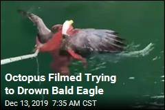 'I've Seen Octopus and Eagles. Never Seen Them Grappling'
