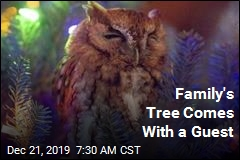 One of Those Owls Isn't an Ornament