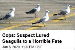 Cops Seek Suspect in Seagull Mass Killing