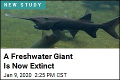 A Freshwater Giant Is Now Extinct