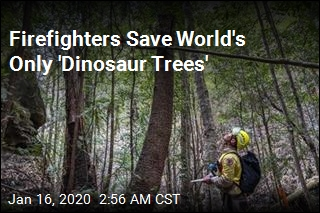 Firefighters Save World's Only 'Dinosaur Trees'