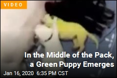 Why This Puppy Was Born Bright Green