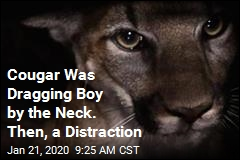 Cougar Was Dragging Boy by the Neck. Then, a Distraction