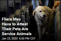 Fliers May Have to Attest Their Pets Are Service Animals