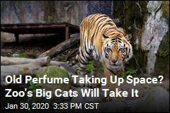 Zoo's Big Cats Will Take Your Old Perfume