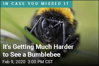 It's Getting Much Harder to See a Bumblebee