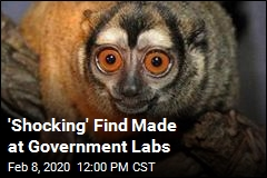 Animals at Government Labs Meet 'Shocking' Fate
