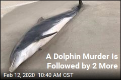 Reward Offered in 'Egregious' Dolphin Killings
