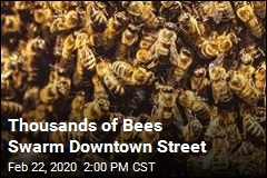 Thousands of Bees Swarm Downtown Street