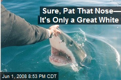 Sure, Pat That Nose— It's Only a Great White