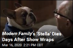 Modern Family 's Dog Star Dies After Show Wraps