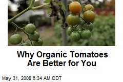 Why Organic Tomatoes Are Better for You