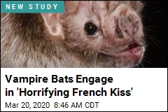 Vampire Bats Engage in 'Horrifying French Kiss'