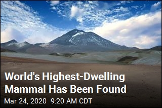World's Highest-Dwelling Mammal Has Been Found