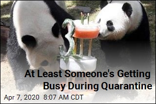 Zoo Closed for Virus, Pandas Get a Room