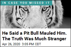 He Said a Pit Bull Mauled Him. The Truth Was Much Stranger
