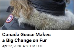 Canada Goose Says It Will Stop Buying 'Virgin' Fur