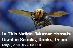 Are 'Murder Hornets' Terrifying? Yes. Are They Delicious? Yes.