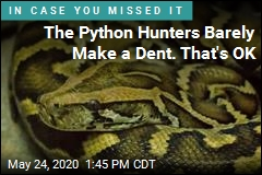 The Python Hunters Barely Make a Dent. That's OK
