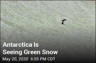 Antarctica's Green Snow Mapped From Space
