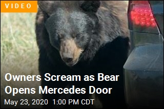 Owners Scream as Bear Opens Mercedes Door