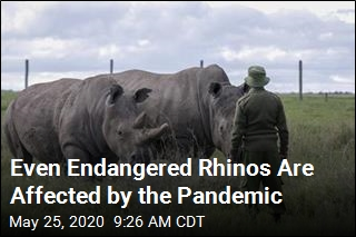 Pandemic Halts Work to Save Rare Rhinos