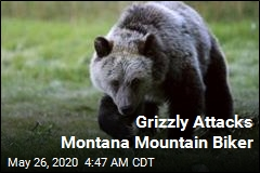 Bear Attacks Montana Mountain Biker