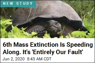 'Entirely Our Fault:' Humans Driving Mass Extinctions