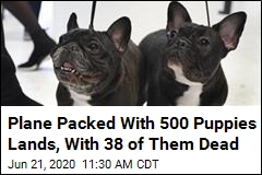 38 Puppies Don't Survive Flight Packed With 500 Dogs