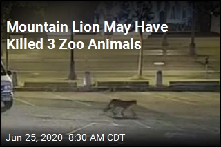 Mountain Lion May Have Killed 3 Zoo Animals